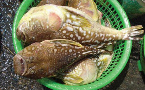 Loại hải sản có lượng độc tố cao